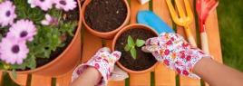 CONSEIL : préparer son jardin en vue du printemps