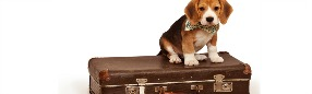 CONSEIL : voyager avec son animal de compagnie