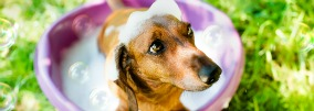 CONSEIL : faire la toilette de son chien