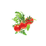 Click and Grow Recharge Triple De Mini-tomates Pour Smart Garden CLG_SG3_TOMATE