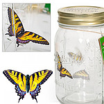 Bocal à papillon magique