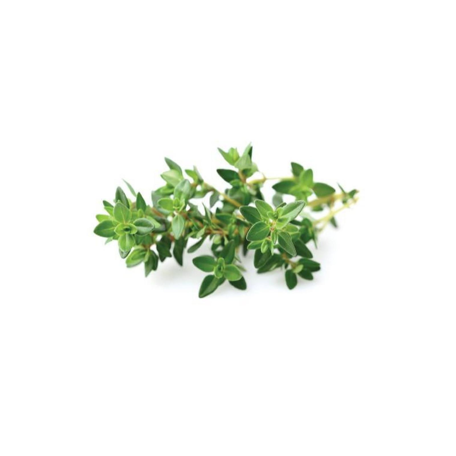 Click and Grow Recharge Triple De Thym Pour Smart Garden CLG_SG3_THYM