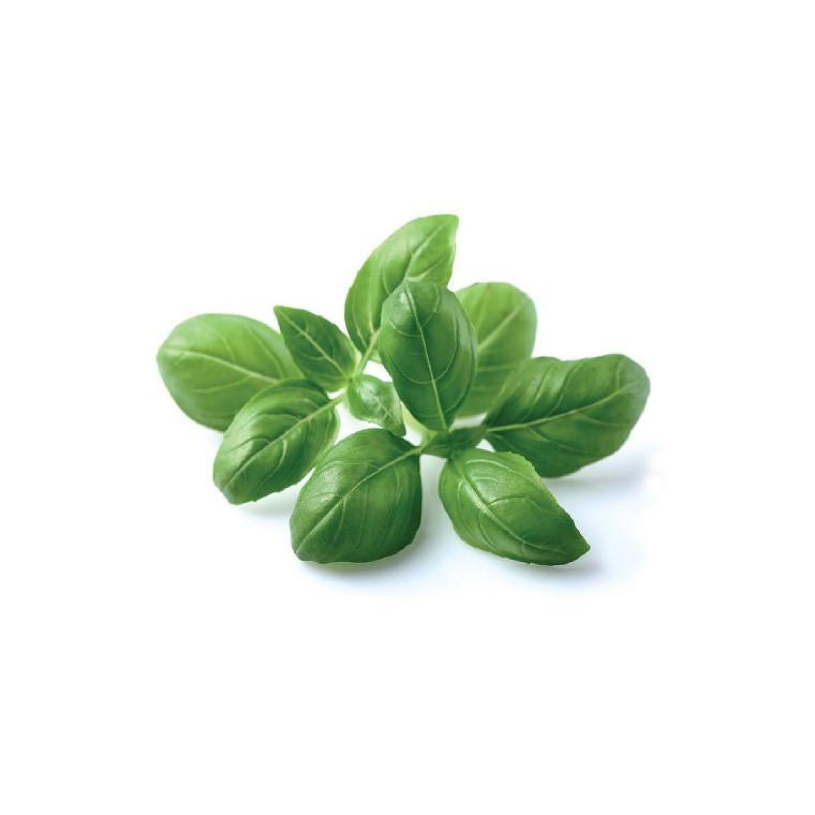 Click and Grow Recharge Triple De Basilic Pour Smart Garden CLG_SG3_BASILIC