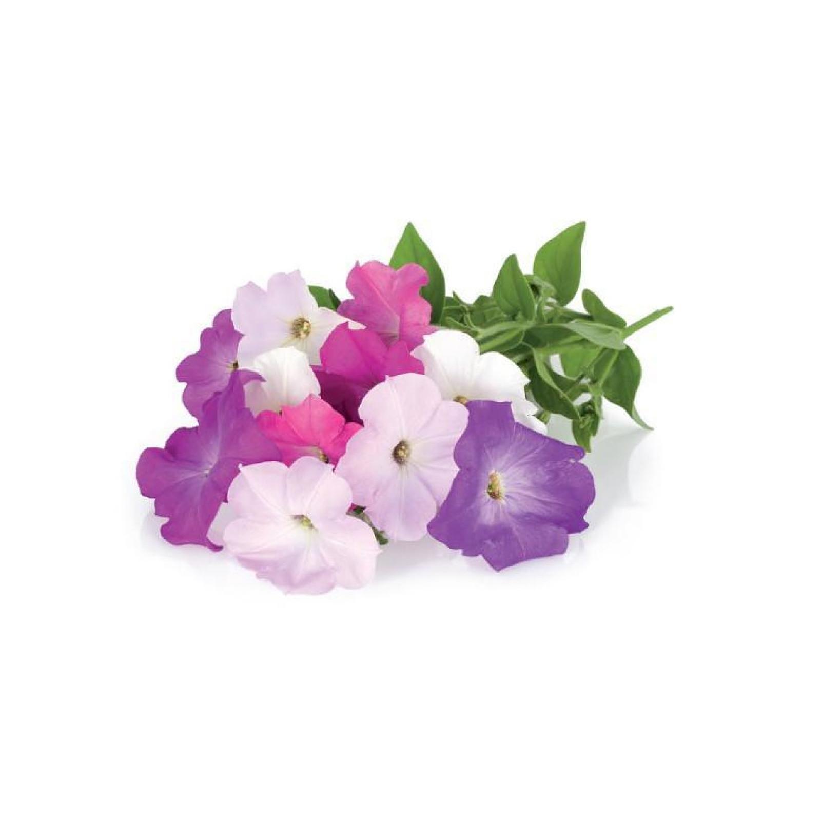 Click and Grow Recharge Triple De Pétunias Pour Smart Garden CLG_SG3_PETUNIA